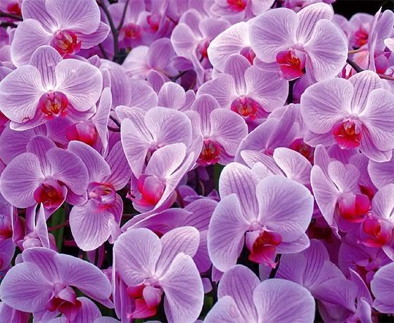 Resultado de imagem para imagens de lindas orquídeas